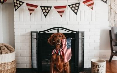 Storm Phobia and Firework Fears in Your Dog